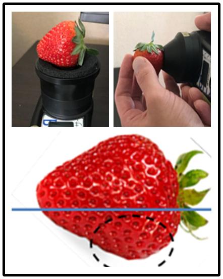 草莓无损糖度计测量方法.png