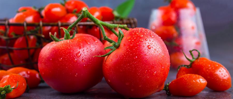 摄图网_501592038_wx_西红柿和圣女果景物拍摄(企业商用).jpg